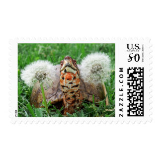 Colorful Box Turtle Postage