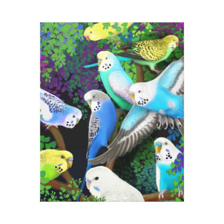 Colorful Budgerigar Parakeets Wrapped Canvas