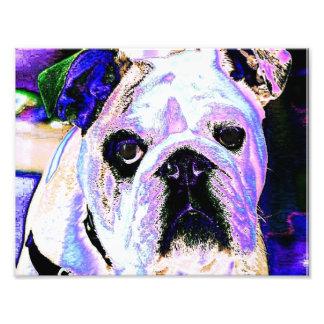 Colorful Bulldog Photograph