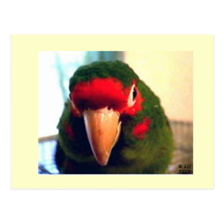 Colorful Buster the Parrot Postcard