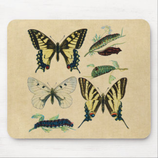 Colorful Butterflies and Caterpillars Mouse Pad