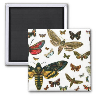 Colorful Butterflies Antiquarian Image Bookmark 2 Inch Square Magnet