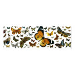 Colorful Butterflies Antiquarian Image Bookmark Business Cards