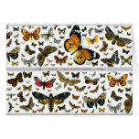 Colorful Butterflies Antiquarian Image Bookmark Greeting Cards