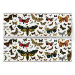 Colorful Butterflies Antiquarian Image Bookmark Greeting Card