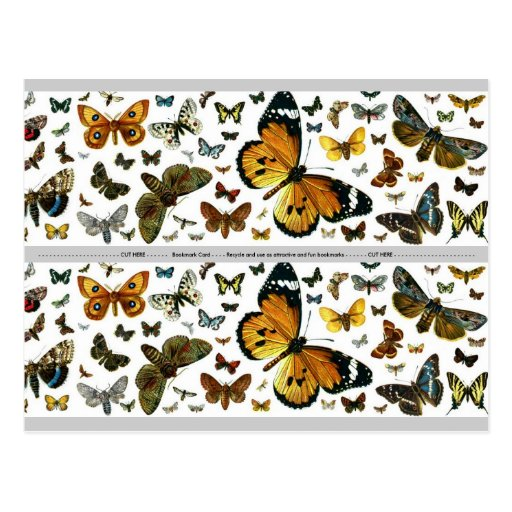 Colorful Butterflies Antiquarian Image Bookmark Postcard