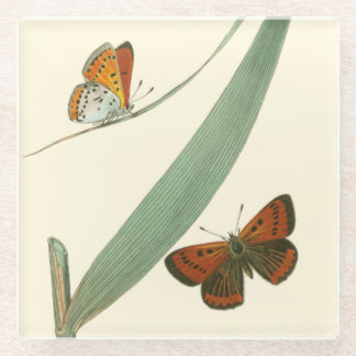 Colorful Butterflies Fluttering Around a Leaf Glass Coaster