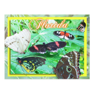 Colorful Butterflies of Florida Postcard
