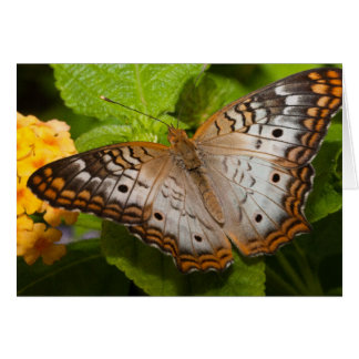 Colorful Butterfly Blank Notecard Stationery Note Card