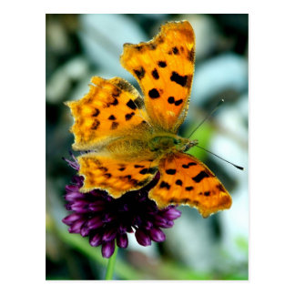 Colorful Butterfly Blossom Flower Whimsical Custom Postcard