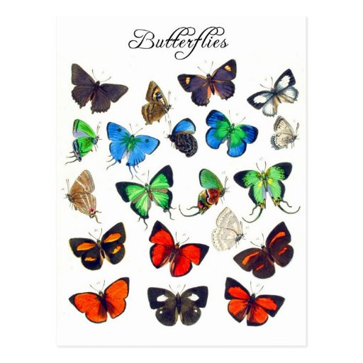 Colorful Butterfly Collection Postcards