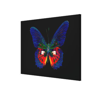 Colorful Butterfly design against black backdrop 2 Canvas Print