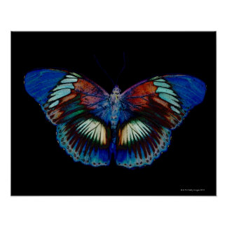 Colorful Butterfly design against black backdrop 2 Poster