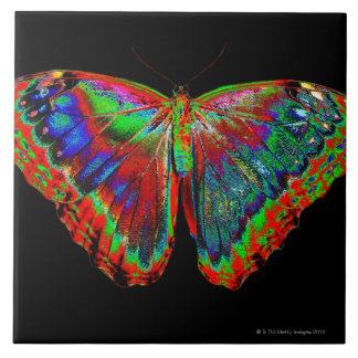 Colorful Butterfly design against black backdrop 3 Tile