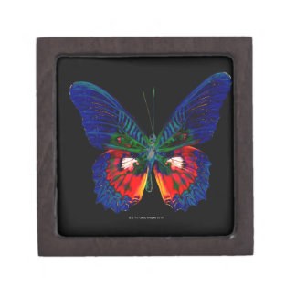 Colorful Butterfly design against black backdrop Jewelry Box