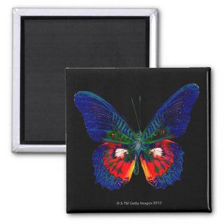 Colorful Butterfly design against black backdrop Fridge Magnets