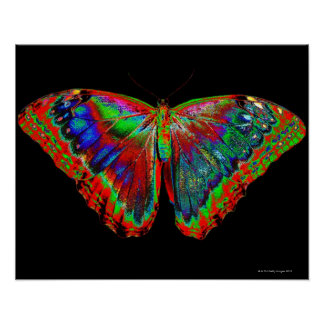 Colorful Butterfly design against black backdrop Poster