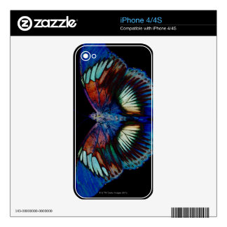 Colorful Butterfly design against black backdrop Decals For The iPhone 4S