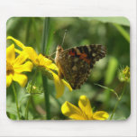 Colorful butterfly. mousepads