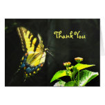 Colorful Butterfly Thank You Card