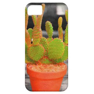 Colorful Cactus iPhone 5 Cases