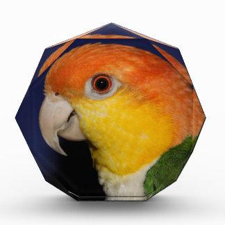Colorful Caique Parrot Acrylic Award