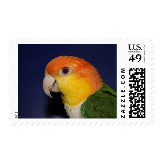 Colorful Caique Parrot Postage