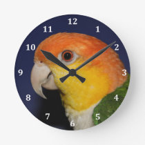 Colorful Caique Parrot Round Clock