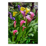 Colorful calla lily flowers card