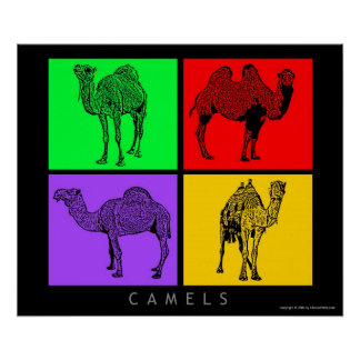 Colorful Camels Poster