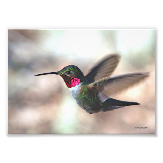 Colorful Capture Photo Print