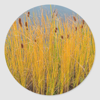Colorful Cattails Classic Round Sticker