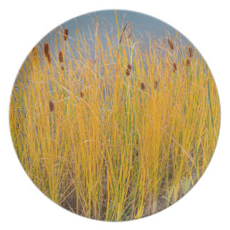 Colorful Cattails Dinner Plate