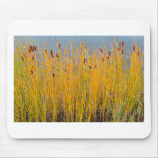 Colorful Cattails Mouse Pad