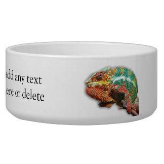 Colorful Chameleon Bowl
