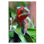 Colorful Chameleon Dry Erase Whiteboards