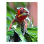 Colorful Chameleon Letterhead