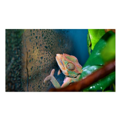 Colorful Chameleon on a Glass Wall Double-Sided Standard Business Cards (Pack Of 100)