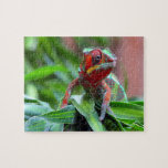 Colorful Chameleon Puzzles