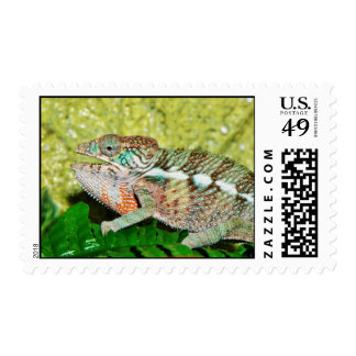 Colorful Chameleon with open mouth Postage