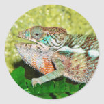 Colorful Chameleon with open mouth Sticker