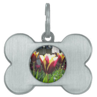 Colorful City Tulips Pet Name Tag