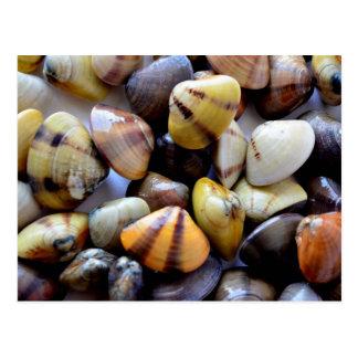 Colorful Clam Shells Postcard
