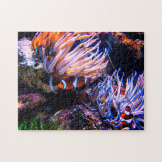 Colorful Clown Fishes Jigsaw Puzzle