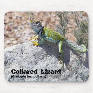 Colorful Collared Lizard Close Up Photograph Mousepads