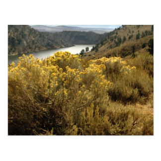 Colorful Colorado Canyon Brush Postcards