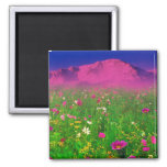 Colorful Colorado, Pikes Peak Mountain 2 Inch Square Magnet