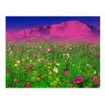 Colorful Colorado, Pikes Peak Mountain Postcard