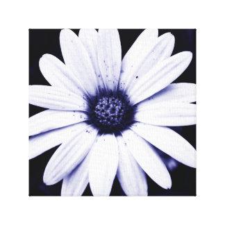 Colorful Colorado Wildflower, Dark Blue/White Canvas Print