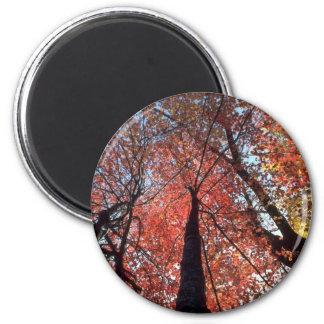 Colorful Colors of the fall season, Upstate New Yo Fridge Magnet